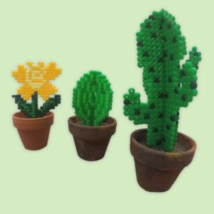 Beaded Cactus Plants
